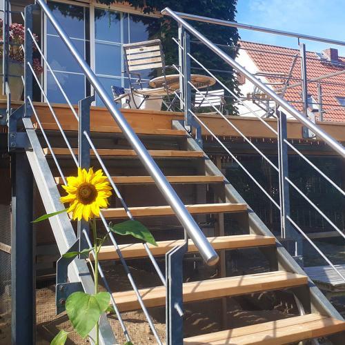 beste-robinie-akazie-terrasse-01.jpg