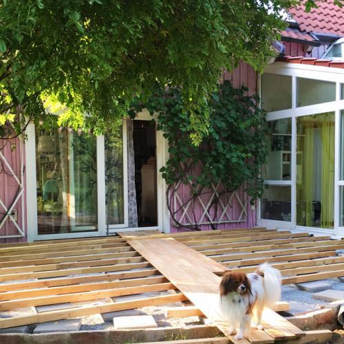 robinie-akazie-terrasse-003.jpg